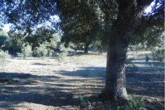 Cabaninas-area-recreativa-2